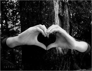coeur et arbre.jpg