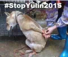 yulin 2015.jpg